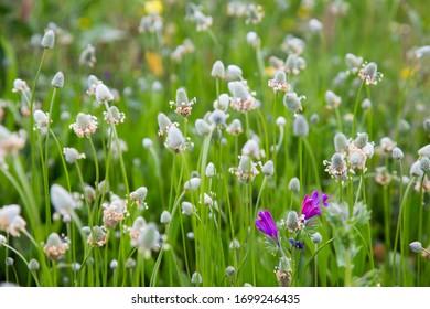 little purple flower in a green field