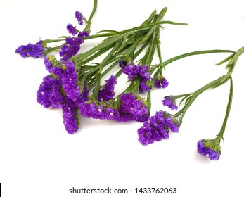 Little Purple flower on white background