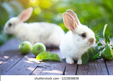 little rabbit and Apple at the garden.