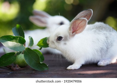 little rabbit and Apple at the garden. Summer