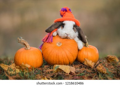 Little rabbit dressed in a knitted hat and scarf with a pumpkins