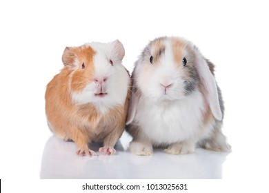 Little rabbit with guinea pig isolated on white