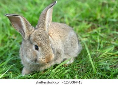 Little rabbit on green grass in summer day