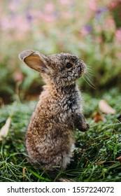 Little rabbit on green grass in summer day.  Funny little rabbit laying in the green grass.
