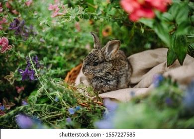 Little rabbit on green grass in summer day. Little dwarf rabbit sitting near flowers.