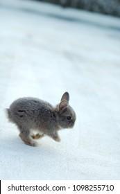a little rabbit run in the snow