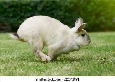 Little rabbit running on the grass