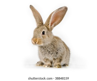 Baby Rabbit Photos - 157,181 baby Stock Image Results