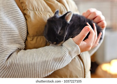 Little rabbit is sitting on the hands of a child
