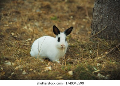 little rabbit with spots in the form of sunglasses in the garden grass