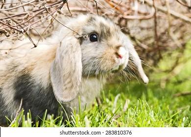 little rabbit walking on grass in the garden