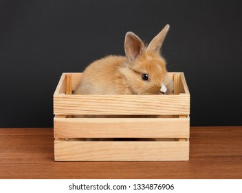 Little rabbit in wooden box