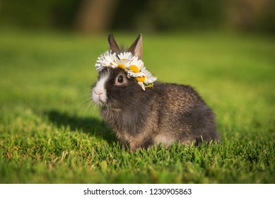 Little rabbit with a wreath of flowers on its head