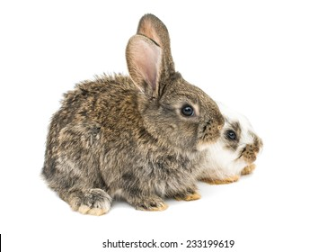 little rabbits on a white background