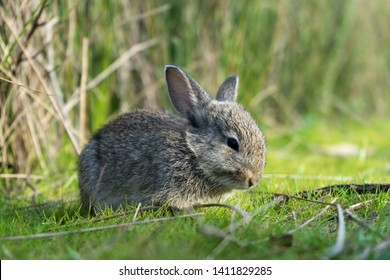little rabit in the forest