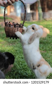 A little rabit wants to eat carrots in the basket that people give.
