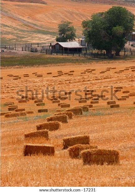 little ranch