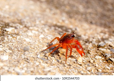 Little red crab on the beach. Puket Island Thailand 27 February 2017