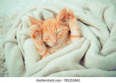 Little red kitten. Cat  lies on the fluffy carpet at home. Little Kitten Sleeps. Close-up of a sleeping kitten. ginger tabby kitten