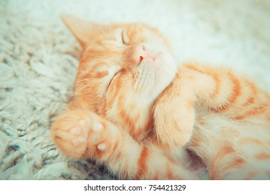 Little red kitten. Cute little kitten. ginger kitten.  kitten lies on the fluffy carpet at home.  Close-up of a sleeping cat
