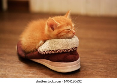Little red kitten lies in a brown sneaker and sleeps with his eyes shut. Kitten in the house, horizontal photo, greeting card template