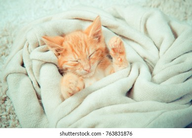 Little red kitten. The kitten lies on the fluffy carpet at home. Little Kitten Sleeps. Close-up of a sleeping kitten