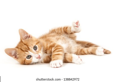 Little red kitten, lying on the ground isolated on white background