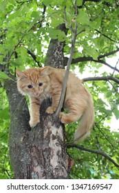 Cat Tree Rescue | MGS - Local Tree surgery Experts | East Lothian &  Edinburgh