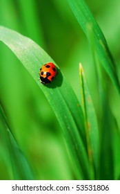 Little red Ladybird on bright green grass leaves (selective focus on ladybird back)