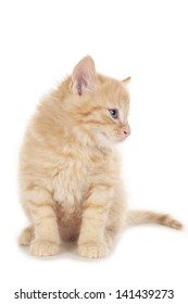 little red tabby kitten looking sideways isolated on white