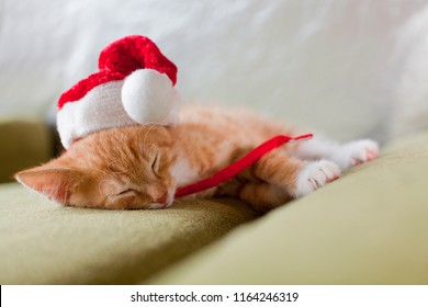 little red and white baby kitten with christmas cap is lying on a sofa and sleeps peacefully