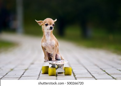 Dog Skate Images Stock Photos Vectors Shutterstock