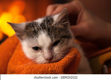 Little rescued kitten after cleaning enjoys a soft blanket and caresses by the fire - relaxing in her new home, closeup, shallow depth