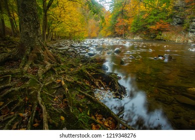 The LIttle River and tree roots in Fall colors in Smoky Mountains National Park