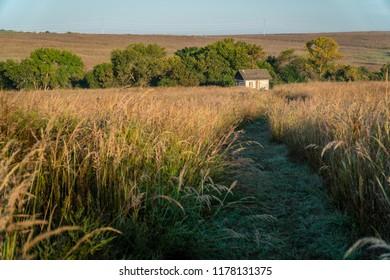 Little shack in the Nebraska tallgrass prairie early on a dewy late summer morning
