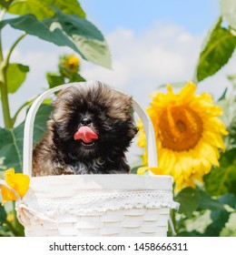 Sunflowers in the Basket Images, Stock Photos & Vectors | Shutterstock