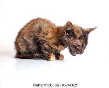 Little sick cat isolated on white background