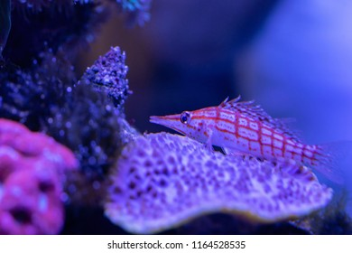 little small fish in the abstract underwater world closeup