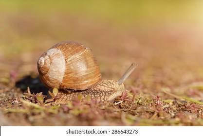 Little snail on a sunny day
