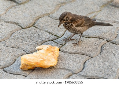 Little sparrow eats, the sparrow is standing in front of a set of bread