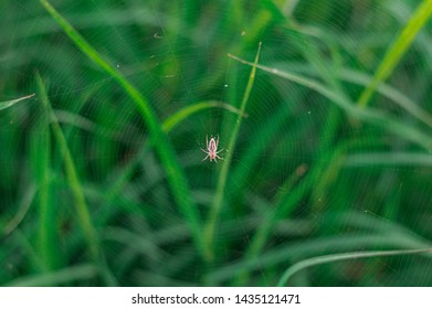 A little spider building webs to ensnare prey over green grass in the garden.