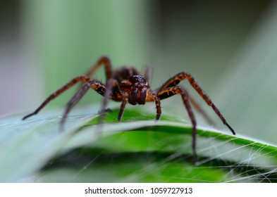 little spider on the grass, macro