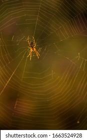 little spider on a spider web on a summer morning