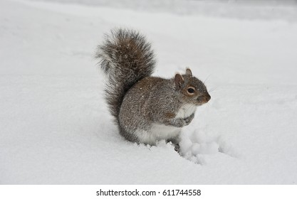 little squirrel in the snow storm