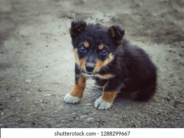 little stray mongrel puppy. black homeless puppy dog sitting on street. loneliness and trust, animals shelter concept
