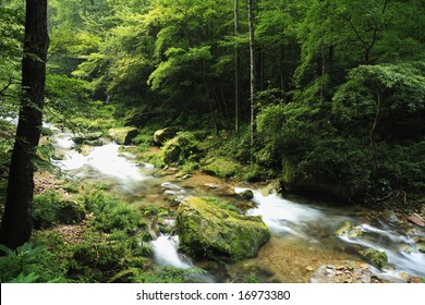 little stream in the mountain valley