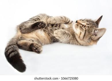 little striped funny kitten lies on the back