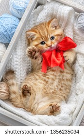 Little striped kitten  in a box with balls of yarn