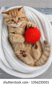 Little striped kitten playing with balls of yarn