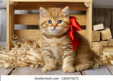 Little striped kitten playing in wood shavings in a carpentry workshop